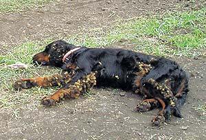 травы от паразитов в организме