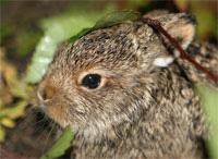 Охота на зайцев петлями
